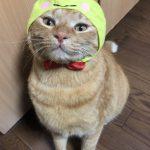 猫×被り物=かわいい